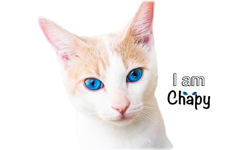 Chapy Cat