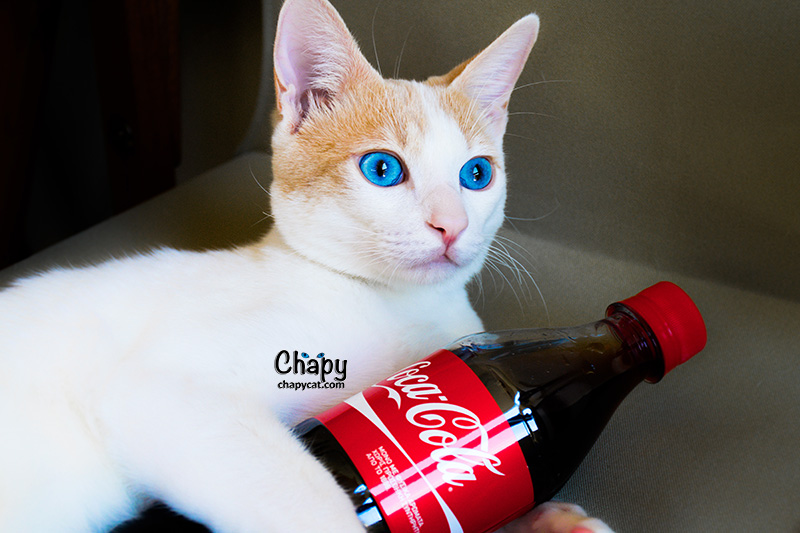 chapy coca cola small