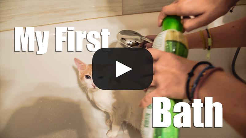 How to Bath a Cat – My First Bath
