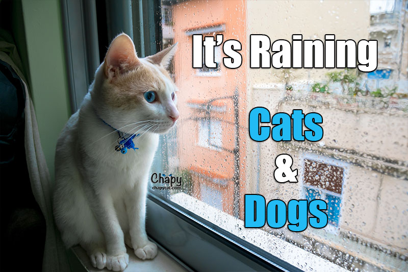 Raining Cats and Dogss