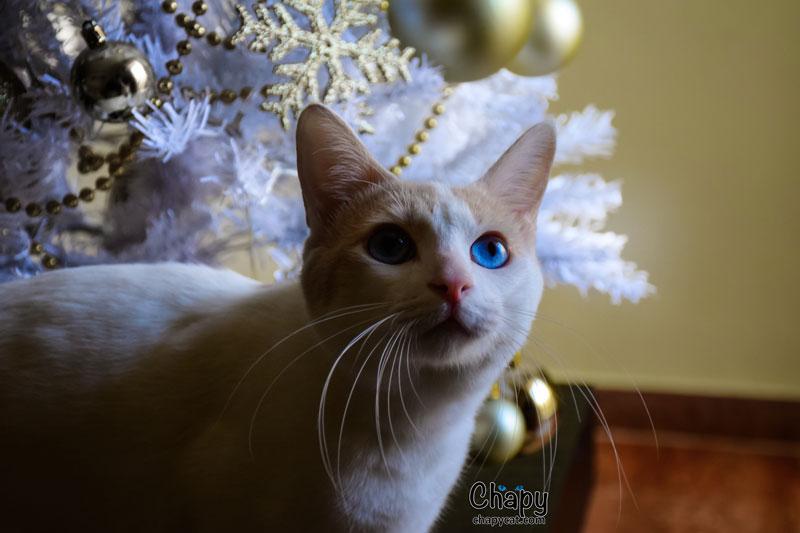 Christmas-Chapy