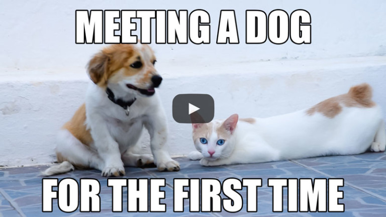 Meeting a Dog for the First Time