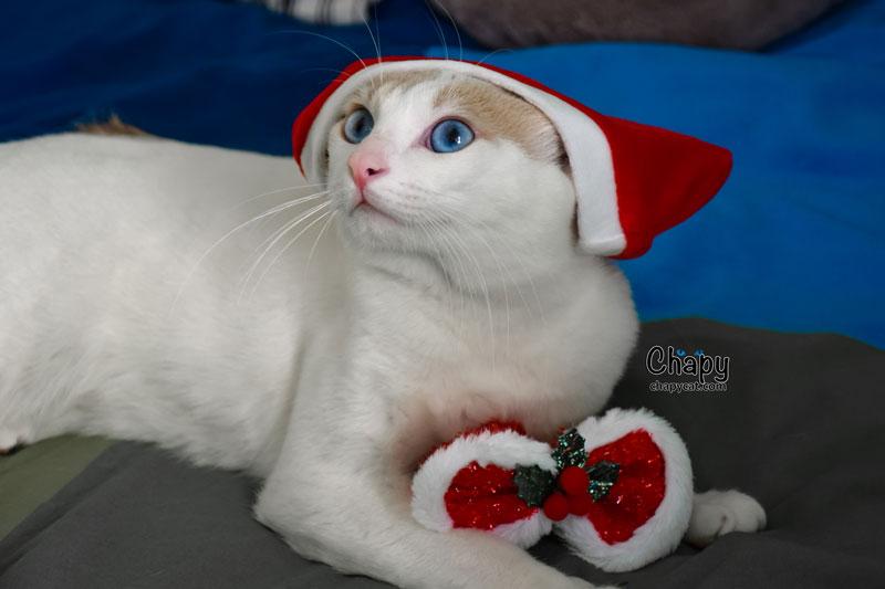Santa-Chapy