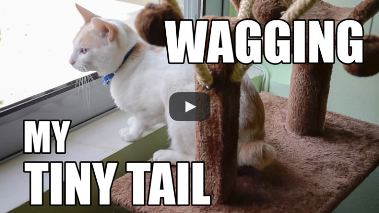 Watch Me Wag My Tiny Tail