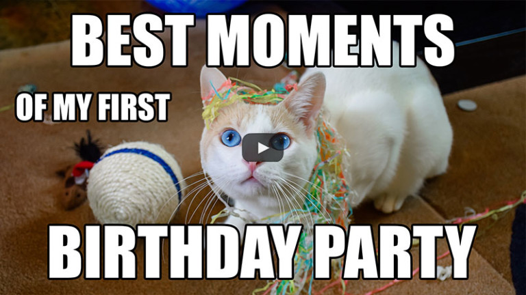 Best Moments of my First Birthday Party