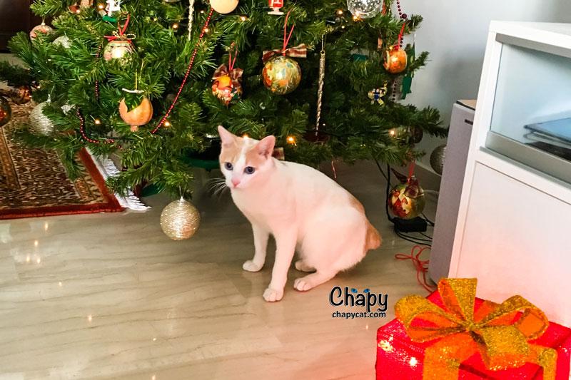 cat-gift-under-christmas-tree