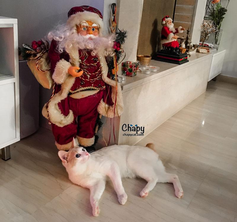 chapy-cat-and-santa-claus
