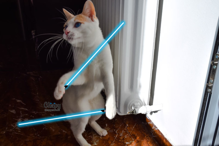 The Force Awakens With Chapy Cat