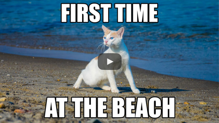 My First Time at the Beach