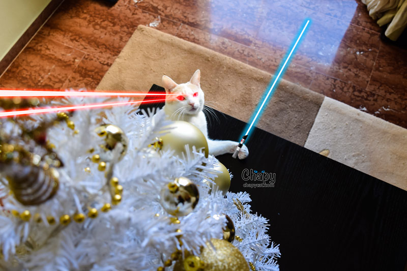 laser-chapy
