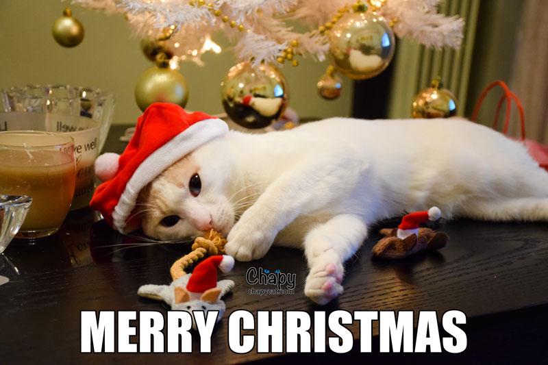 merry-christmas-meme - Chapy