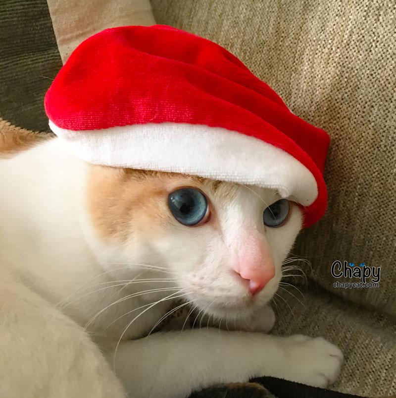 santa-paws-Chapy