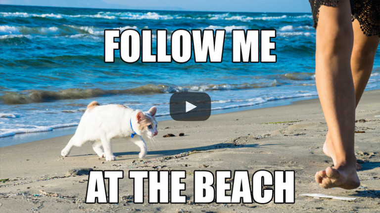 Follow Me at the Beach