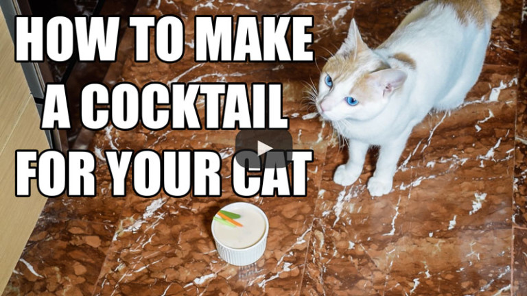 How To Make A Cocktail For Your Cat