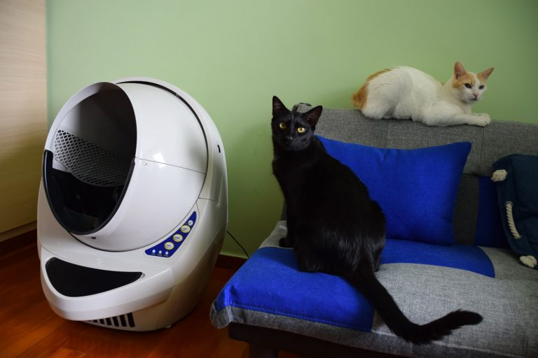 Trying The Litter-Robot Self Cleaning Litter Box for The First Time